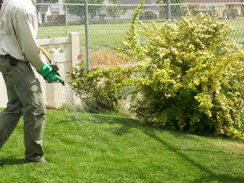 Spraying & fertilizing Outdoor Pest Control