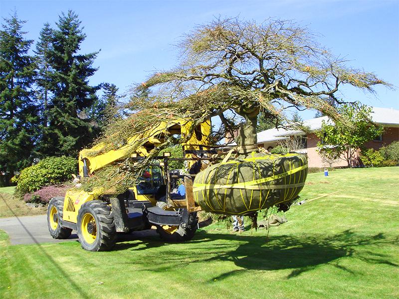 Tree Planting & Transplanting