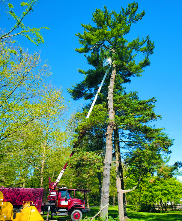 Tree Removal, Trimming, and Pruning Services
