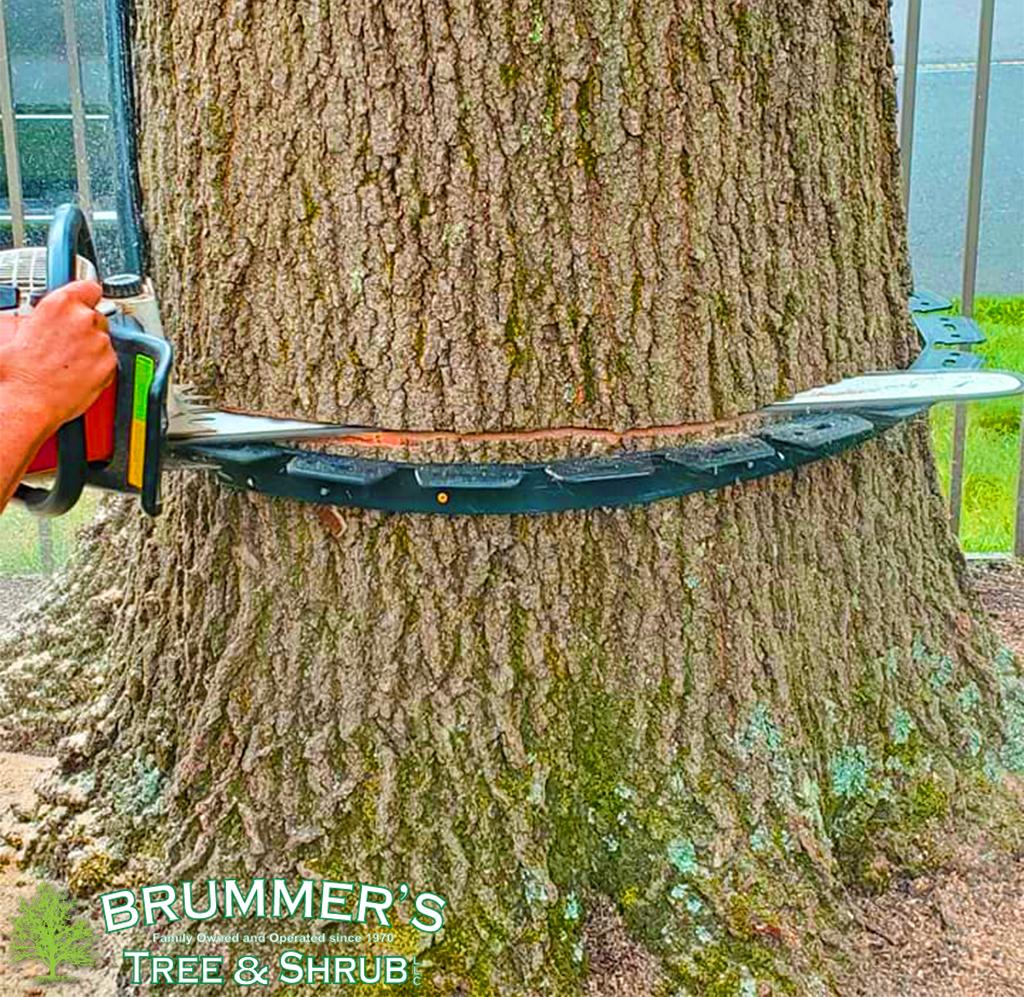 brummers-strump-1
