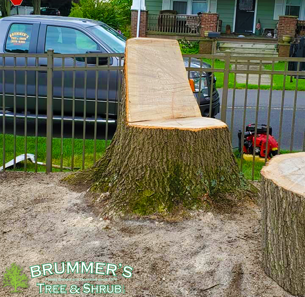 brummers-stump-2