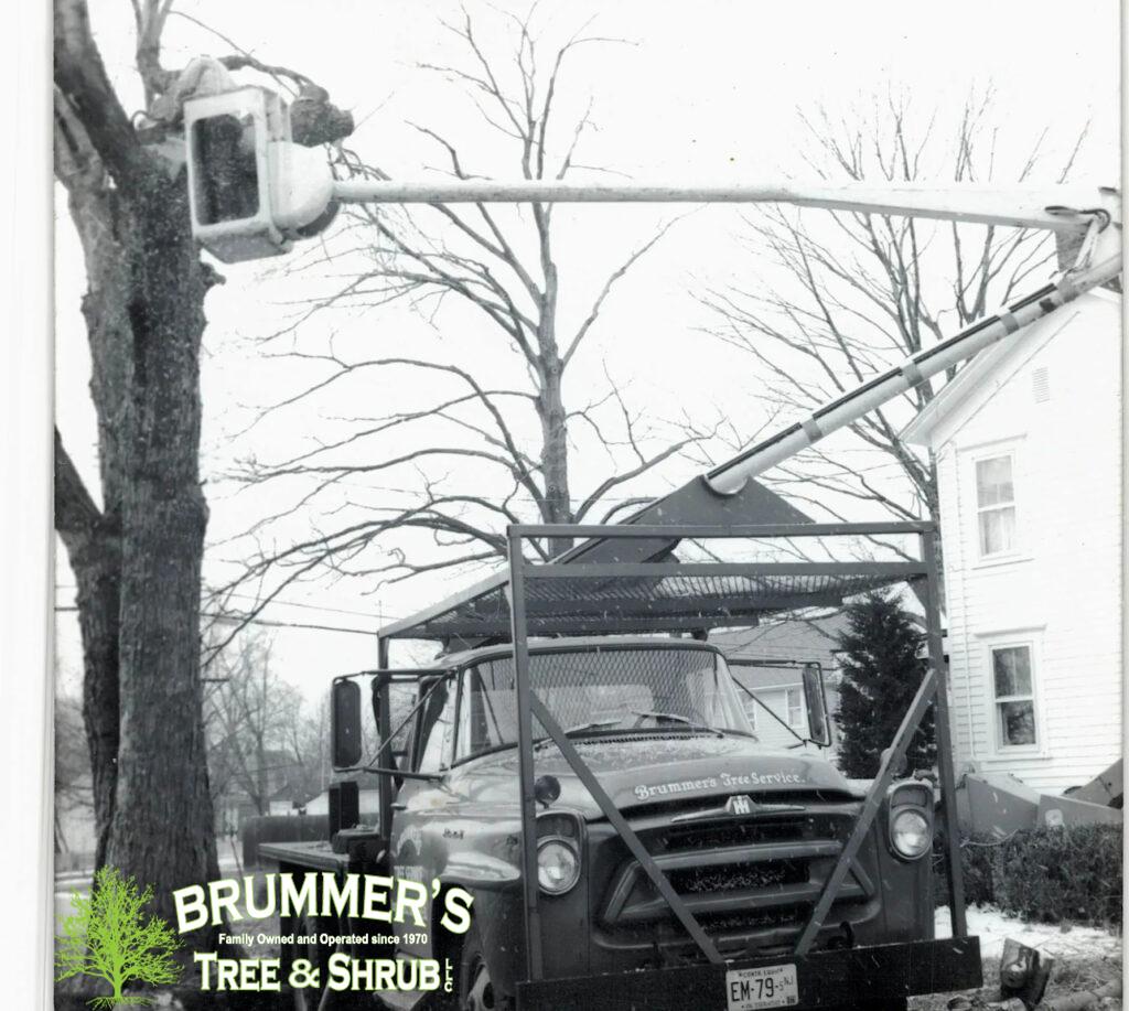 brummers-tree-service-1