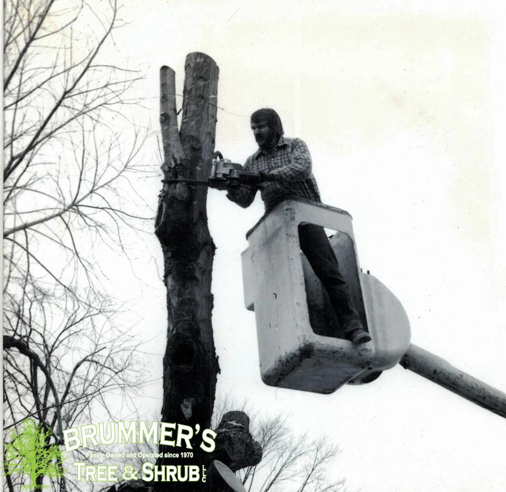 brummers-tree-service-4